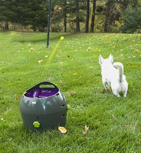 automatic tennis machine for dogs