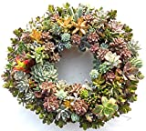"Succulent Living Wreath - 13"" Planted And Grown In Kansas Sun"