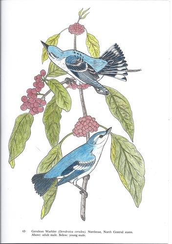 Audubon's Birds of America Coloring Book Paperback