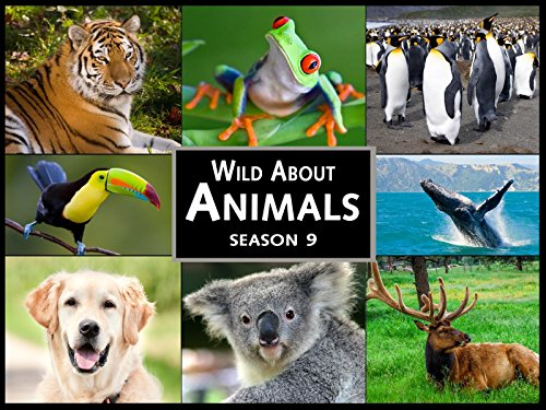 Season 9 Wild About Animals