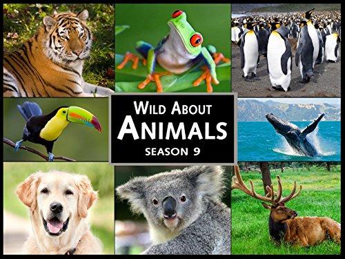 Season 9 Wild About Animals