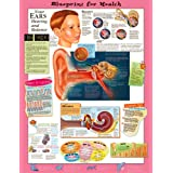 Blueprint for Health Your Ears Chart