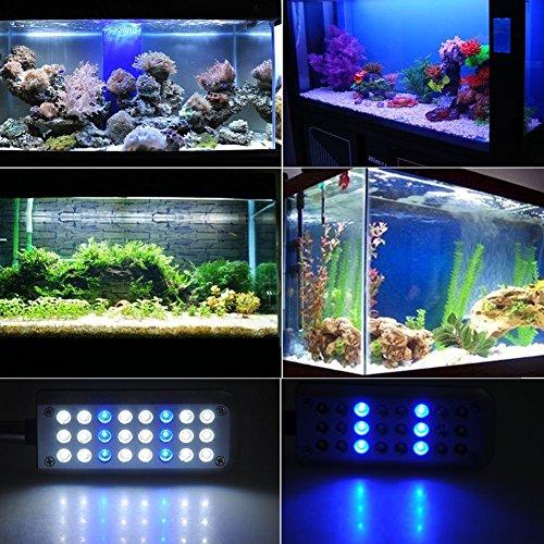 lampe d aquaruim lumiere aquarium 24 led 1 5w eu plug 18. Black Bedroom Furniture Sets. Home Design Ideas