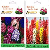 Alkarty Cineraria And Antirrhinum Snapdragons Seeds Pack Of 20 (Winter)