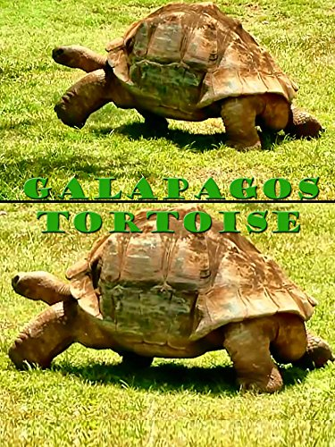 Clip: Galapagos Tortoise on Amazon Prime Instant Video UK