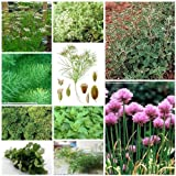 10 Packs of Herb Seeds - Herb Garden Collection