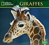Giraffes National Geographic 2016 Wall Calendars
