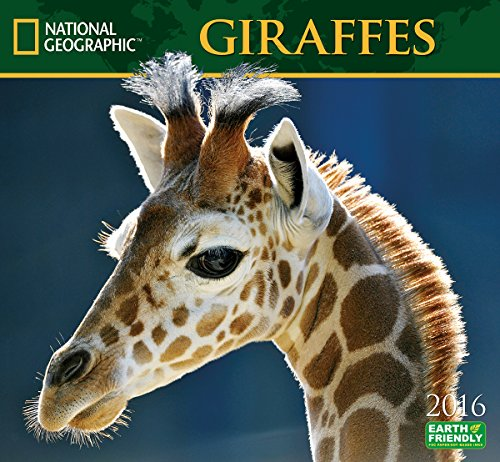 Giraffes National Geographic 2016 Wall Calendars PDF