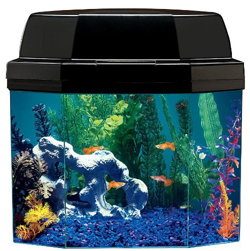 Best fish tank aquariums for home 2015 for 5 gallon fish tank filter