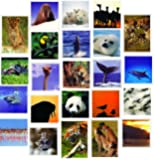 20 Wildlife Blank Greeting or Birthday Cards