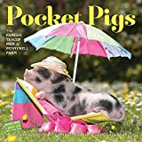 img - for Pocket Pigs Wall Calendar 2016: The Famous Teacup Pigs of Pennywell Farm book / textbook / text book