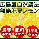 無農薬・無肥料 広島の国産レモン 1kg ランキングお取り寄せ