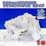 (海水魚)C.P.Farm バクテリア付きライブロックレプリカ Mサイズ 1個(形状お任せ) 本州・四国限定[生体]