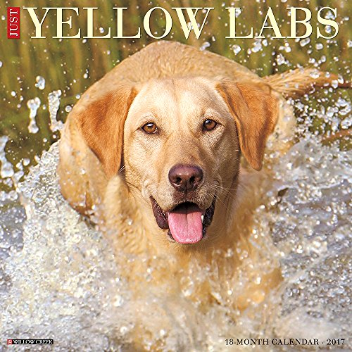 Just Yellow Labs 2017 Wall Calendar (Dog Breed Calendars)