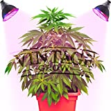 Vintage Grow HIGH YIELD Grow Light harvests more solid dense buds EVERYTIME!   Upgrade to THE BEST, MOST PRODUCTIVE, and MOST EFFICIENT grow light on the market!  Are you looking for a heavy harvest with healthy plants and flowers each and every time...