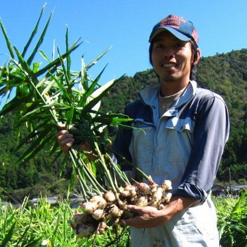 スジのない「絶品根生姜」2014年度産 【農薬・化学肥料不使用】