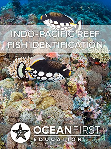 Indo-Pacific Reef Fish Identification (Fish Identification compare prices)