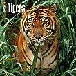 CALENDRIER 2015 TIGRE - ANIMAUX SAUVAGE