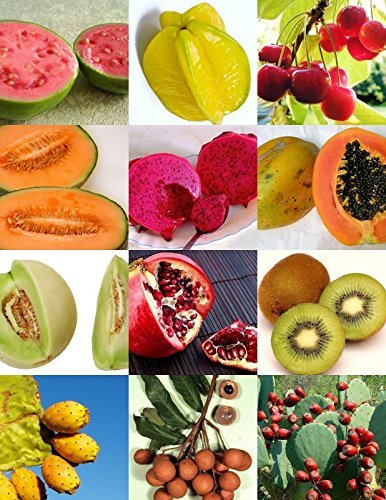 Exotic Fruits Mix Sweet Edible Plant Tree Fragrant Tropical Fruit Seed -15 Seeds (Edible Fruit Kit compare prices)