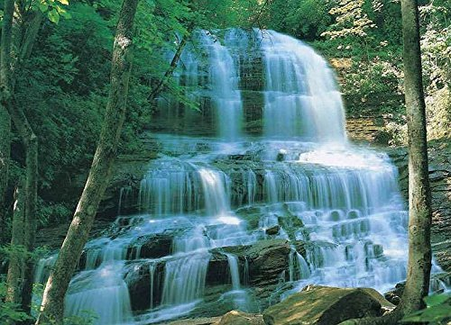 pearsons-falls-huge-wall-mural-12ft-6in-wide-x-8ft-10in-high-by-wall-a-bees