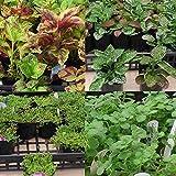 おまかせ観葉植物・地被植物の苗9株セット(コリウス ヒポエステス ベビーティアーズ 他)入荷に応じて5~9種類セレクトして出荷させていただきます。