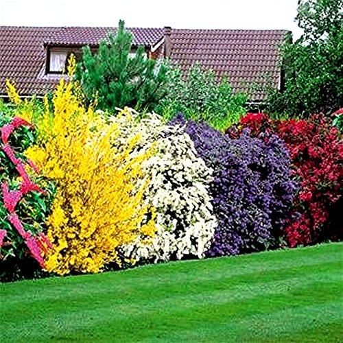 flowering-shrubs-hedge-5-hedge-plants