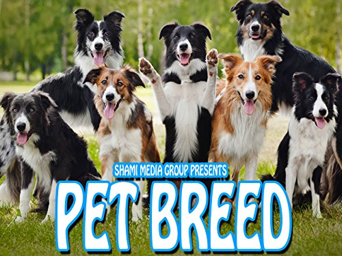 Pet Breed on Amazon Prime Instant Video UK
