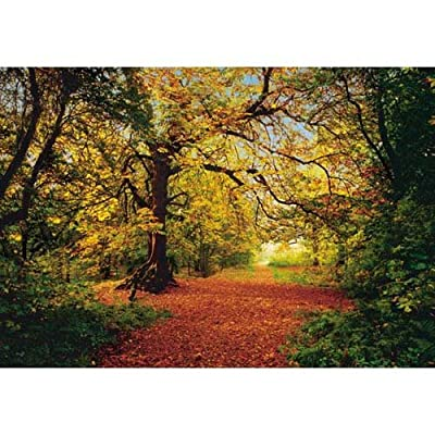 Wallpaper - Photo Wallpaper Autumn Forest In 270 Cm X 194 Cm from Happyfans