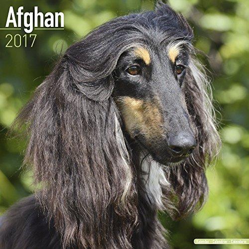 Afghan hound gifts - wall calendar