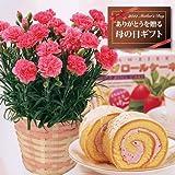 【送料無料!遅れてもうれしい母の日ギフト】ピンクカーネーション5号鉢と苺ロールケーキのセット