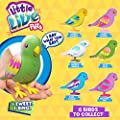 Little Live Pets Birds Assortment