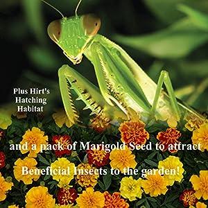 Praying Mantis 2 Egg Cases 100 - 400 Babies with Hirt's Hatching Habitat + Seeds
