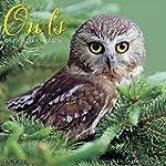Owls 2016 Calendar