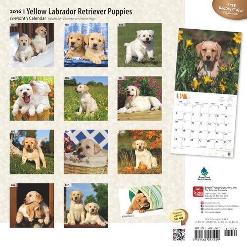 Labrador Retriever Puppies Yel 2016 Wall