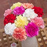 Bunches 12 Classic Carnations Bouquet with Free UK Delivery and Chocolates