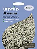 Unwins Pictorial Packet - Alyssum Carpet Of Snow - 800 Seeds