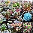 300/bag Mix Succulent seeds lotus Lithops Pseudotruncatella Bonsai plants Seeds for home & garden Flower pots planters