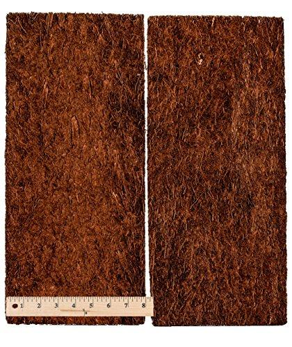 Fernwood Tree Fern Panels Large Size 17 5 Quot X 8 Quot Twin