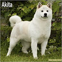 Hachiko Dog Breed Price In India