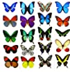 Temporary Butterfly Tattoos (Free Shi…