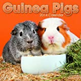 Avonside Publishing Ltd Guinea Pigs 2014