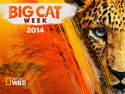Big Cat Week 2014 Season 1