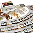 135 Variety Heirloom Survival Seed Bank - Emergency Seed Vault - Non GMO - Non Hybrid - ALL IN ONE: Vegetables - Fruits - Culinary Herbs - Medicinal Herbs - Sprouting Seeds ~ 135 VARIETIES - PLUS: Nine Rare Heirloom Tomato Varieties FREE! - FANTASTIC GIFT IDEA!
