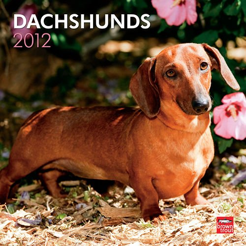 Dachshunds Wall Calendar 2012