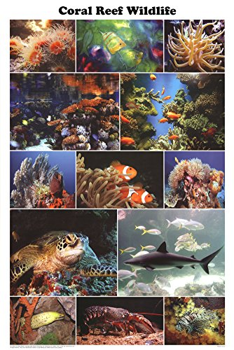 Laminated Coral Reef Wildlife Poster 24x36 Photo Montage (Aquarium Fish Chart compare prices)