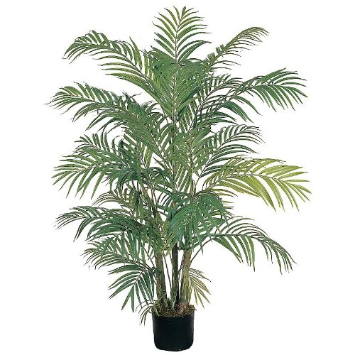 4′ Areca Silk Palm Tree
