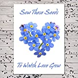 Set of 25 Individual Forget-Me-Not Seed Packets / Seed Favors (Watch Love Grow)