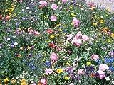 One Pound Wildflower Mix with