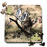 Angelique Cajam Safari Birds - South African Vultures and Marabou Storks - 10x10 Inch Puzzle (pzl_20128_2)
