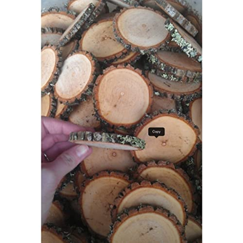 50 2-3 Sourwood Tree Log Disc Wood Slices Branch Button Coaster Rustic Wedding Christmas Ornament